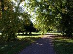 Quittenbäume im Burghof der landschaftspark-degenershausen